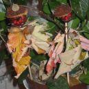 dve tetki jesen - že malo posušeni