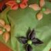rožice iz  testenin, podlaga rižev papir