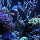 akvarij 3