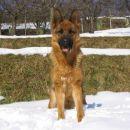 Roxy v snegu