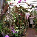 razstava orhidej-kurbus