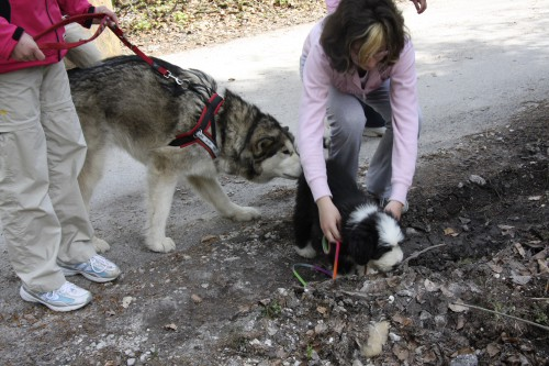 Gozd Martuljek - Aska, Flo in Mike - 4.5.2008 - foto
