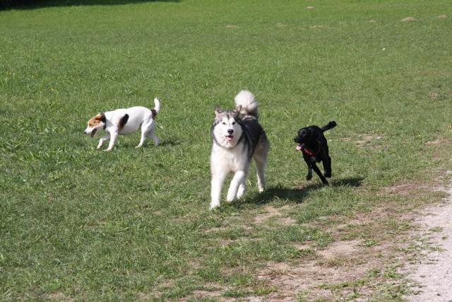 Tivoli - Aska, Luna, Lun - 21.9.2008 - foto