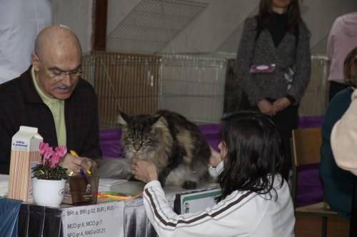 Mačja razstava Ljubljana - 8.2.2009 - foto povečava