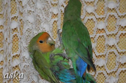 Ora in Ali - 26.2.2009 - foto povečava