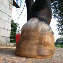 Left hind Oct 11'06