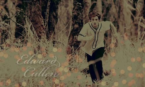 Twilight  - foto