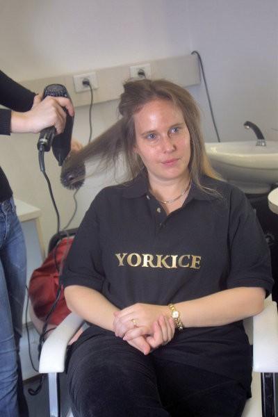 Yorkice na druzinskem dvoboju - foto