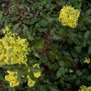 12. mlade rastline
