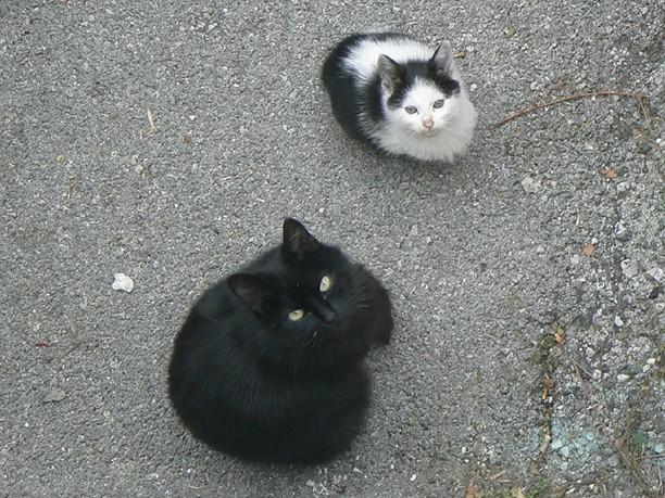 Lor in njegova mačja mama