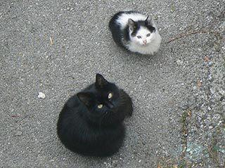 Black in b l a c k - foto