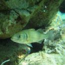 slike pod vodo