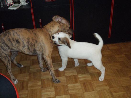 Sisi & Lulu-Lynn - foto