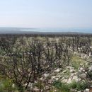 Požgana vegetacija (nekaj 10ha) pri Košljunu.