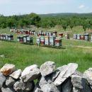 Domačini se ukvarjajo s čebelarstvom..