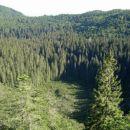 Smrekova draga je naravni rezervat in značilen primer visokokraškega mrazišča...