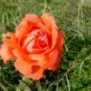 Vrtnica-Trotl ziher digitalec