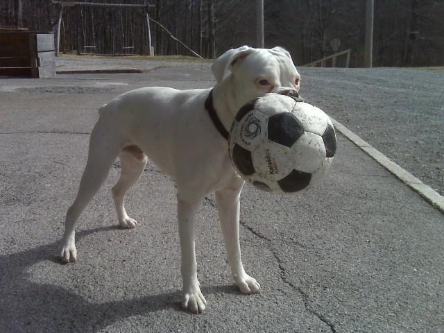 Moj nogometaš