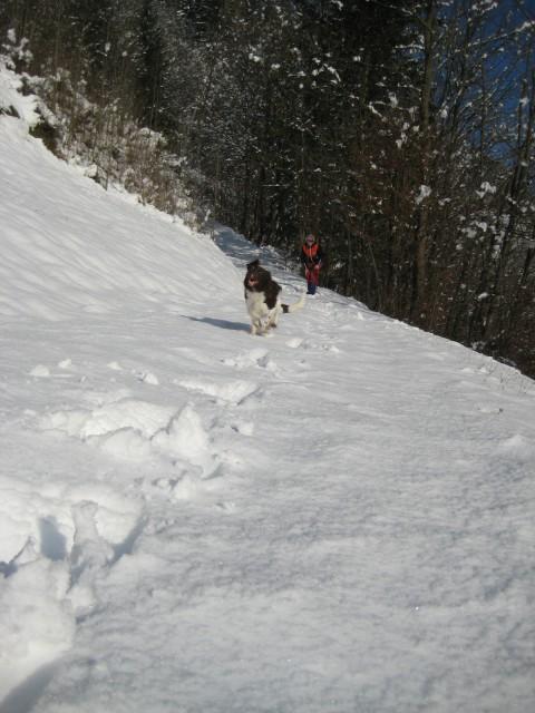 Škovine in Sneg 26.11.08 - foto