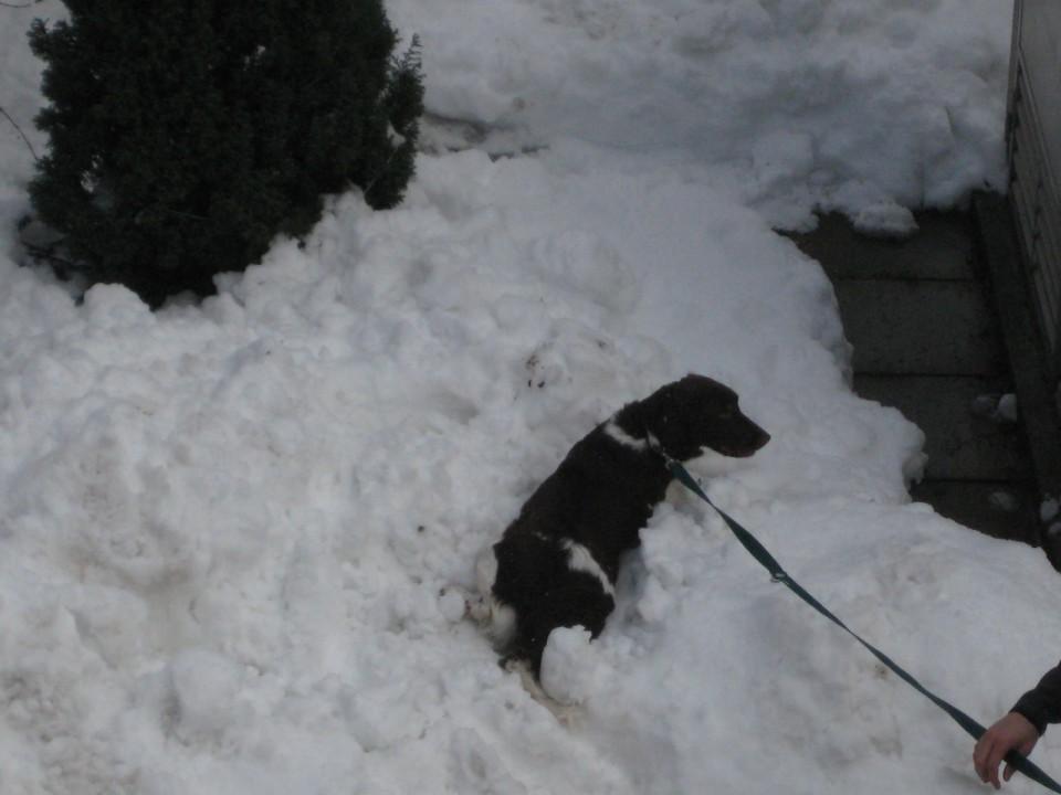 Prijeten sneg 2.2.2009 - foto povečava