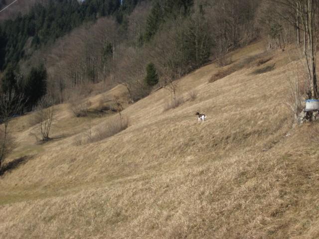12.2.2009 Spet sprehod po škovinah - foto