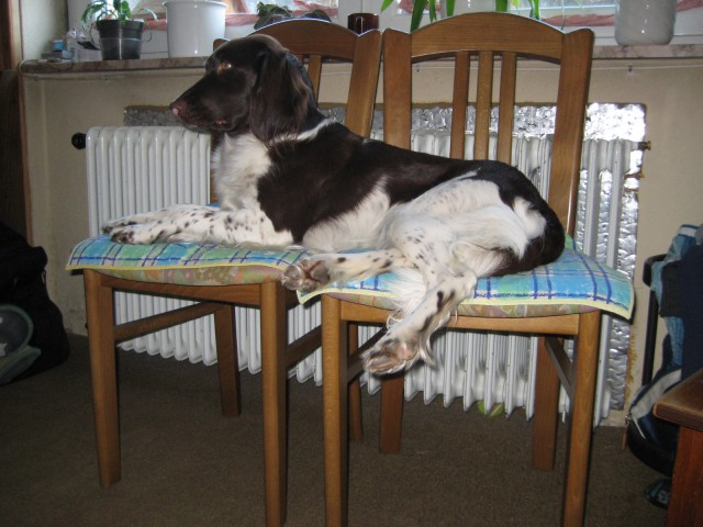 25.2.2009 Škovine s5 - foto