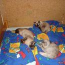 tri mačje nerazdružljive prijateljice