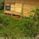 naselitev  čebelnjaka