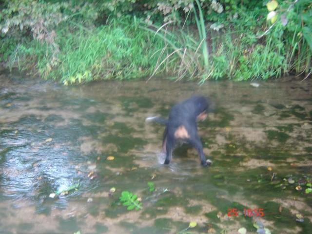 Iiiii jz pa nogice kopam =) neki cudnga zelenga je pod vodo ..le kaj je to?