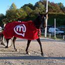 17.10.2004 Ljubljana 7.dirka_Mobitel d.o.o. Zmagovalec dirke g.Aleš Pavšič (Mirage