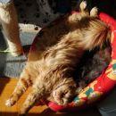 tko na sončku ležat