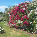 ob odhodu pa še morje razcvetelih vrtnic. Čudovit dan!