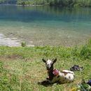počitek ob bohinjskem jezeru