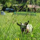 za travo