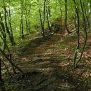 Najprej gre pot po gozdu, strmina je kar konkretna
