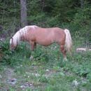 samo tega konja še slikam, potem pa hitro domov