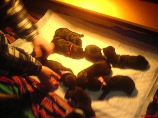 Mladički 2008 - foto