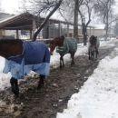 Miskoti-zimske radosti