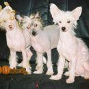 Jaz in moja bratca....z leve proti desni...Gawain, Ganymed in Gareth