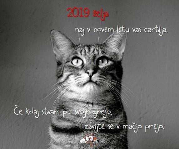 Večkotadventni koledar Mačjega botra 2018 - foto