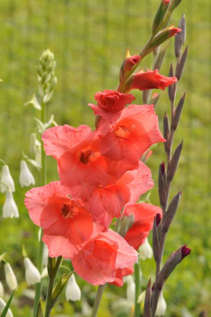 Savinjska 6.8.2011 - foto