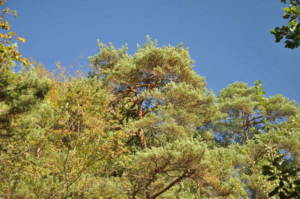 Šmartinsko jezero via Lahovna 15.10.2011 - foto povečava