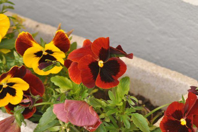 Savinjska 17.5.2012 - foto