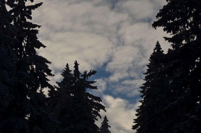 Kope 26.1.2014 part II. - foto
