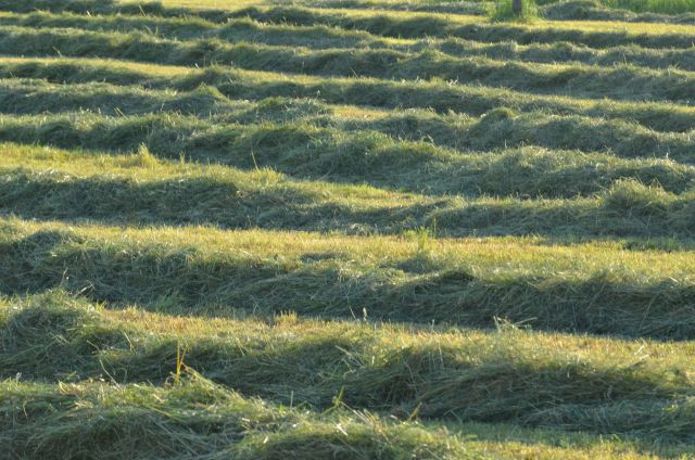 Po dolini zelenega zlata 5.5.2014 - foto