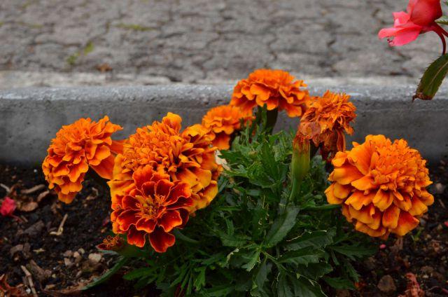 Gornji Grad, Celje 16,17.6.2014 - foto