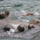 Peru ima tudi svoj otok podoben Galapagosu Ballestas z mnogimi živalmi