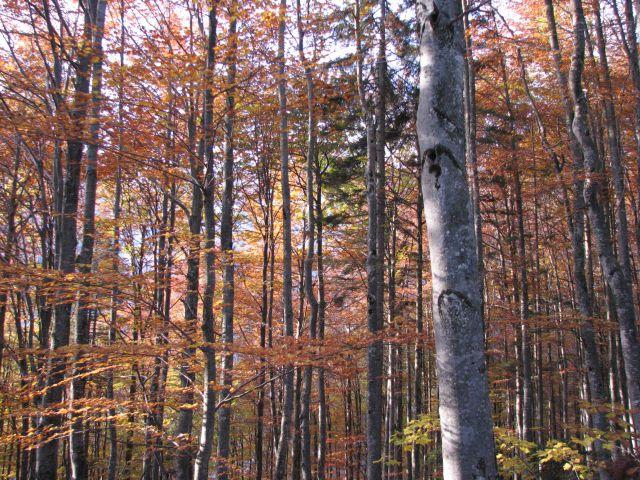 Jesen v gozdu...