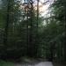 Začetek poti pri odcepu gozdne ceste za Jermanco.