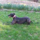 Greyhoundica Lona (ex Karen)